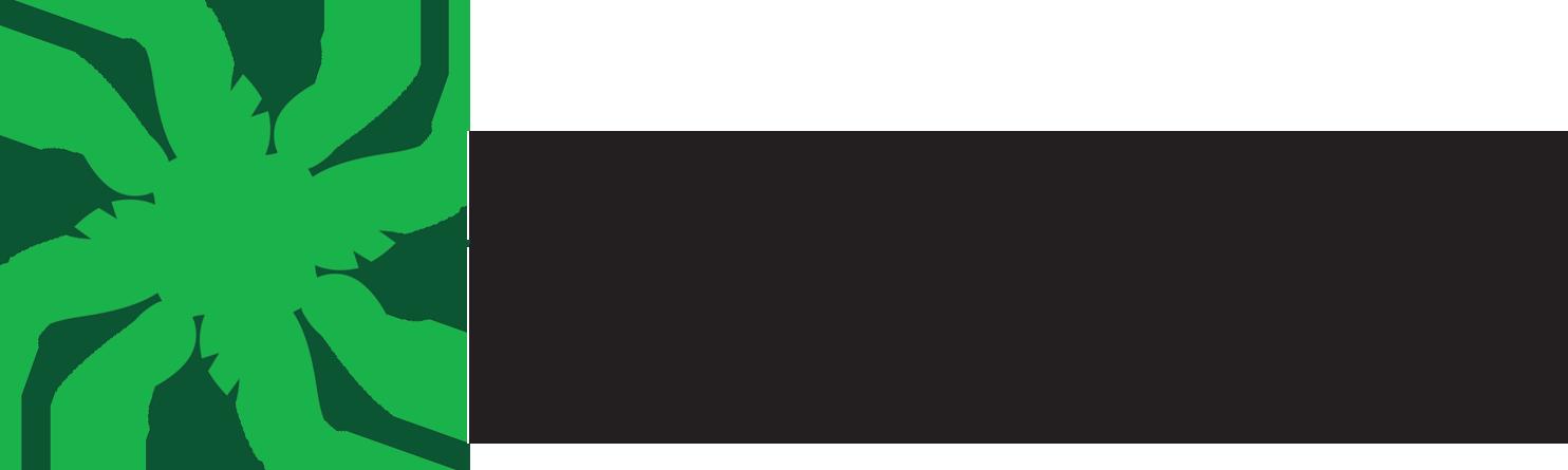 DailyForest