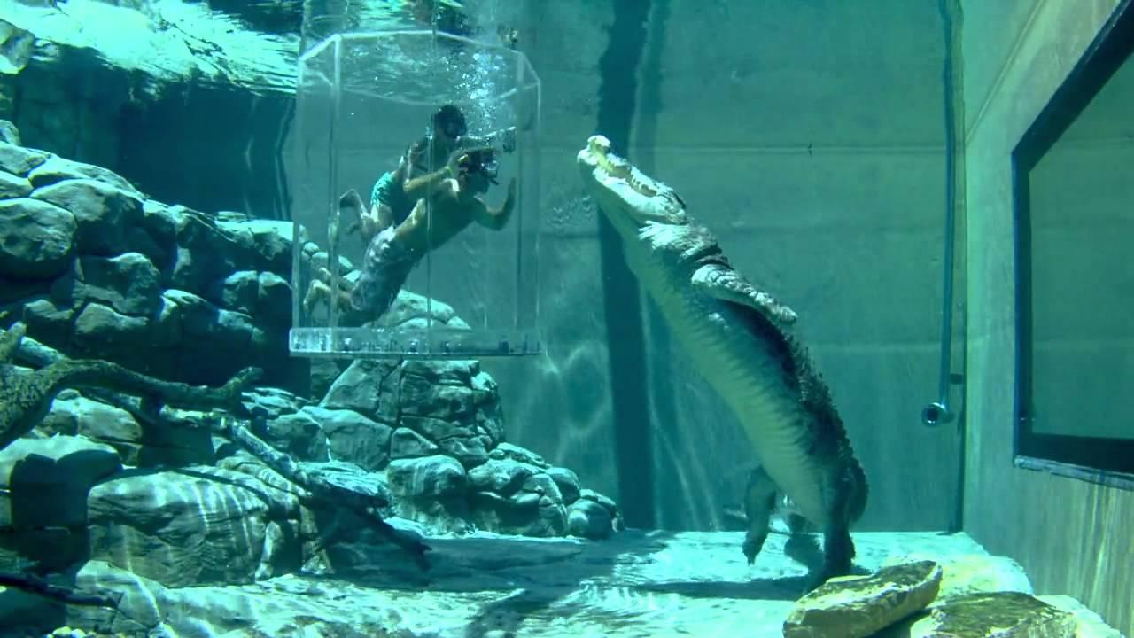 Crocosaurus Cove Pool - Darwin, Australia