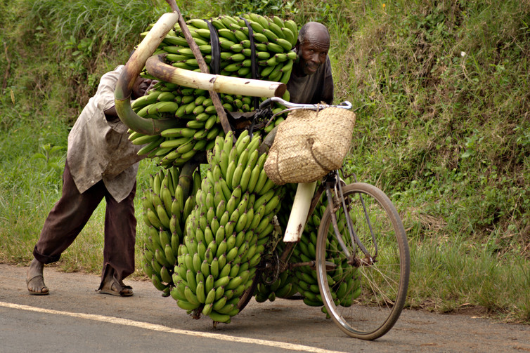Plantain Hauling Vehicle