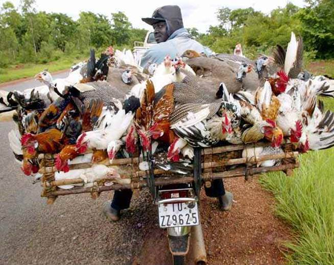 Chicken Hauling