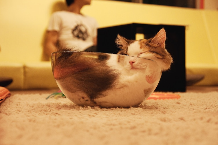 Cats That Prove They Can Sleep Anywhere