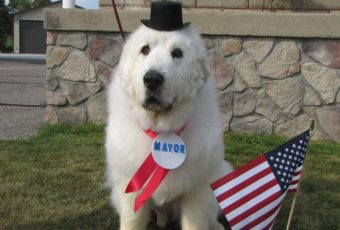 Mayor Duke