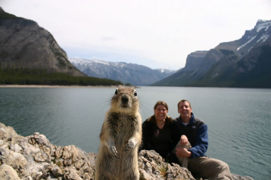 The Funniest Animal Photobombs Of All Time DailyForest - The 39 funniest animal photobombs of all time