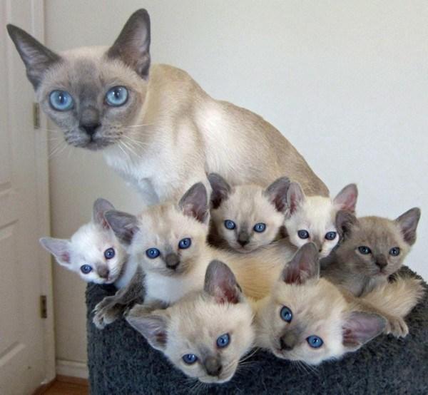 Blue Eyed Babes