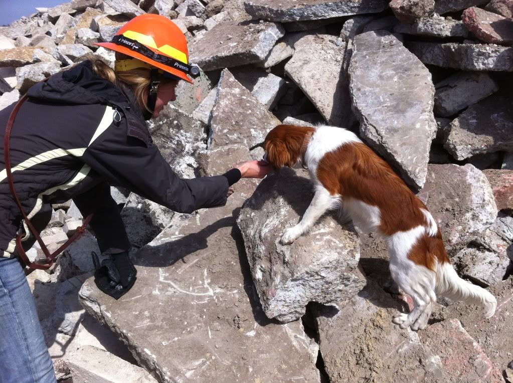 How To Train A Search And Rescue Dog