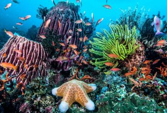 A Healthy, Colorful Coral Reef