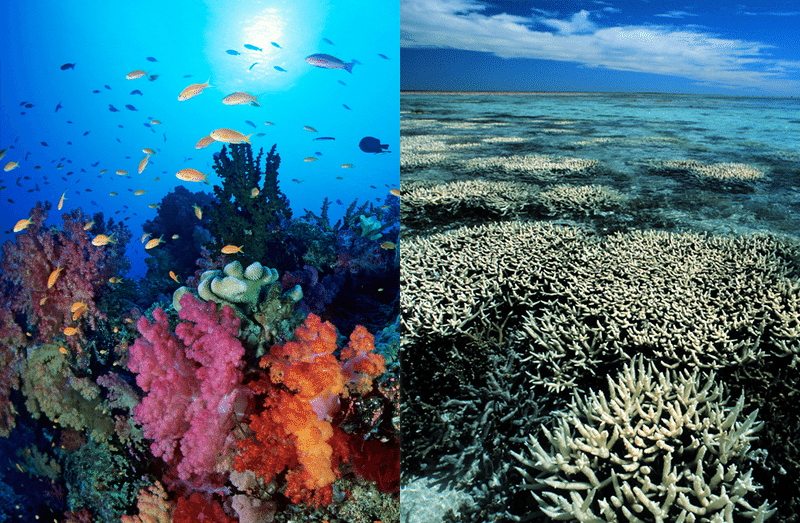 Coral Reef Before And After Bleaching