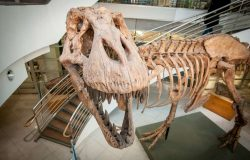 There Were About 2.5 Billion T Rex Dinosaurs On Earth