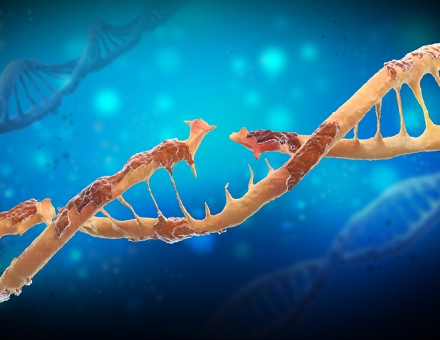 Repairing Damaged DNA Is A Huge Part Of The Process